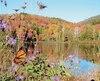 L'automne est également une excellente période pour observer les Monarques.