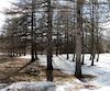 Des arbres de plusieurs dizaines d'années situés autour du scolasticat des clercs de Saint-Viateur de Joliette sont menacés.