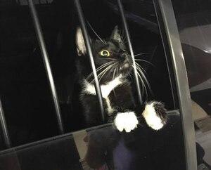 Un chat arrêté car il est pris pour un voleur