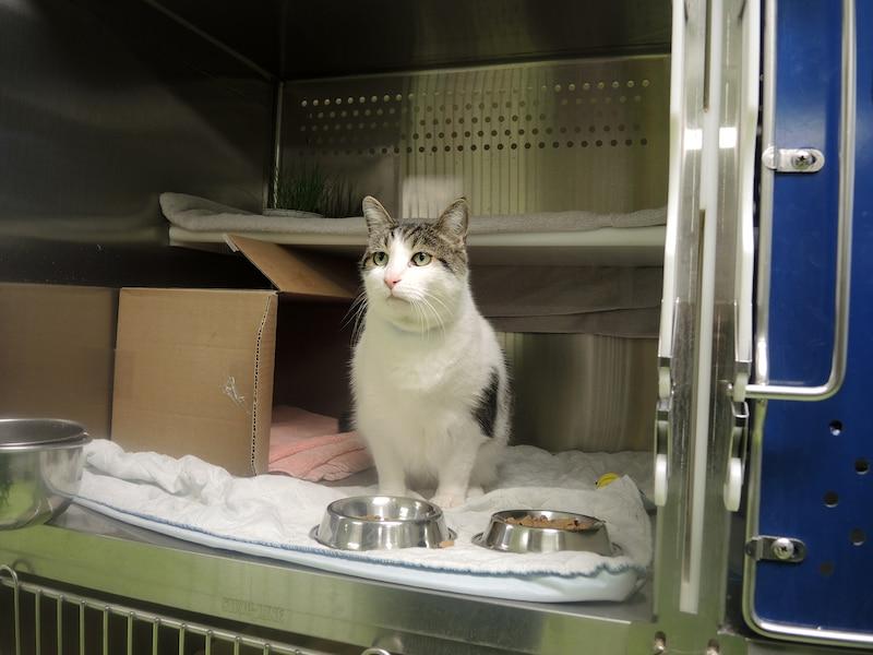 Beaucoup trop de chats abandonn s cette ann e jdm - Porter plainte pour abandon de famille ...