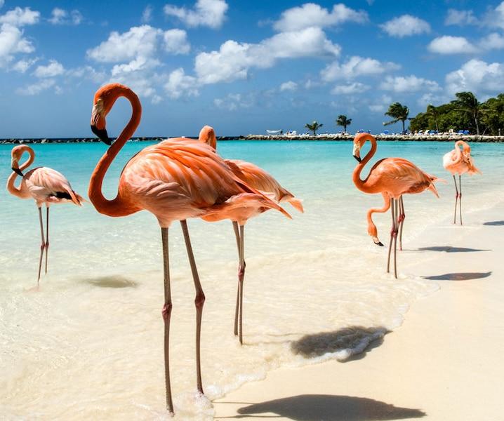 Découvrir l'île mystique d'Aruba!