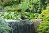 Parterre d'oiseaux avec plantes et ruisseau menacé par une clôture