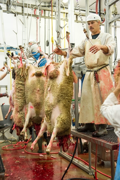 Un citoyen musulman s'apprête à tuer sa bête dans un abattoir, où les règles d'hygiène et de bien-être animal sont plus strictes.