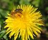 Bloc situation abeilles printemps
