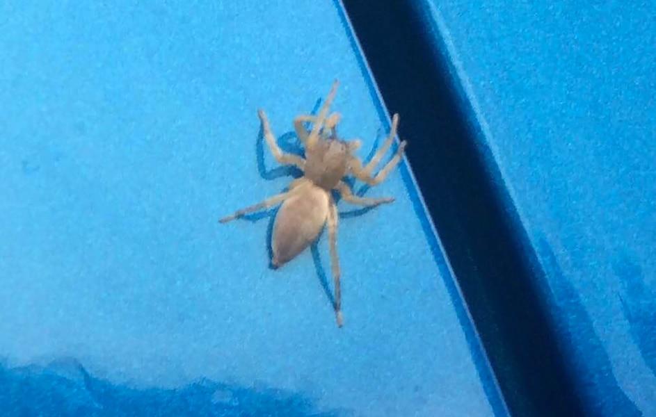Sa voiture envahie par des centaines d araign es jdm for Se debarrasser des araignees