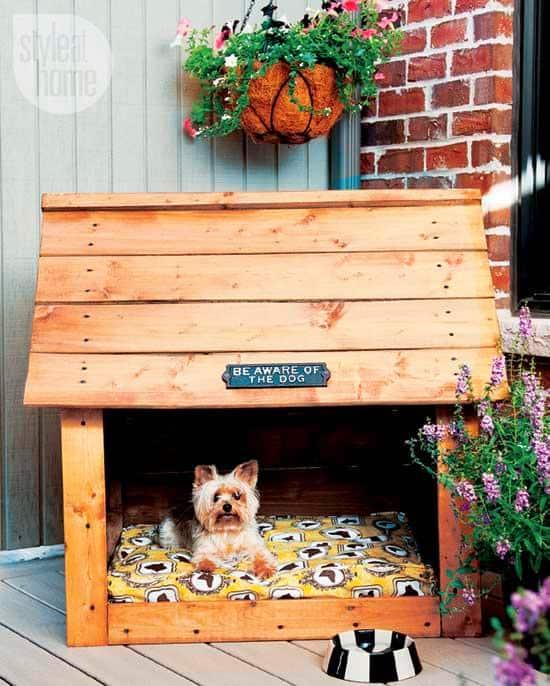 dogs-in-condos-2.jpg