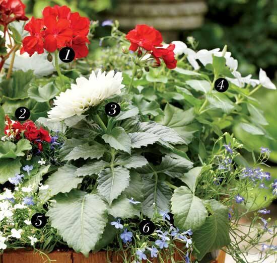 container-diy-cottage-plant-list.jpg