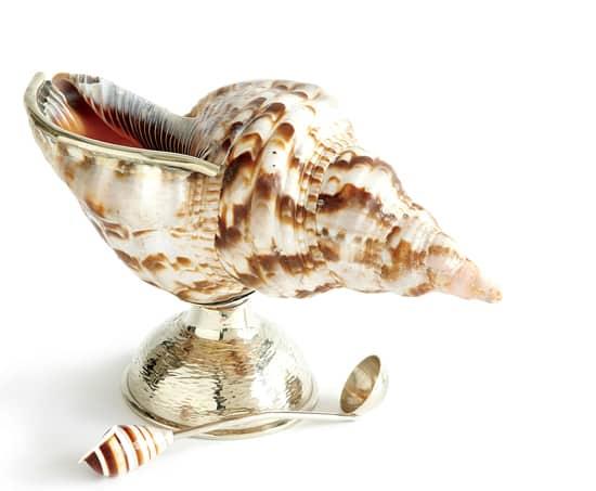 PALE-shell2.jpg