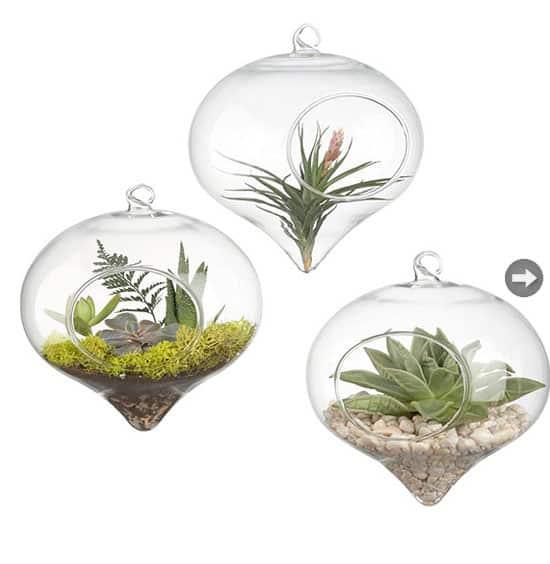 terrarium-glass-vase.jpg