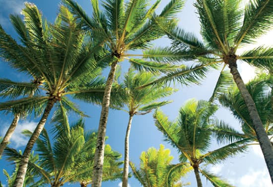 destination-palmbeach-trees.jpg