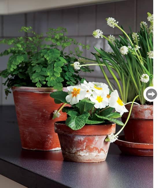 country-chic-pottedplants.jpg