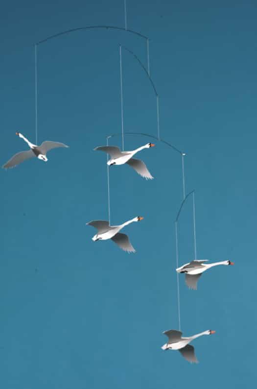 f-swans