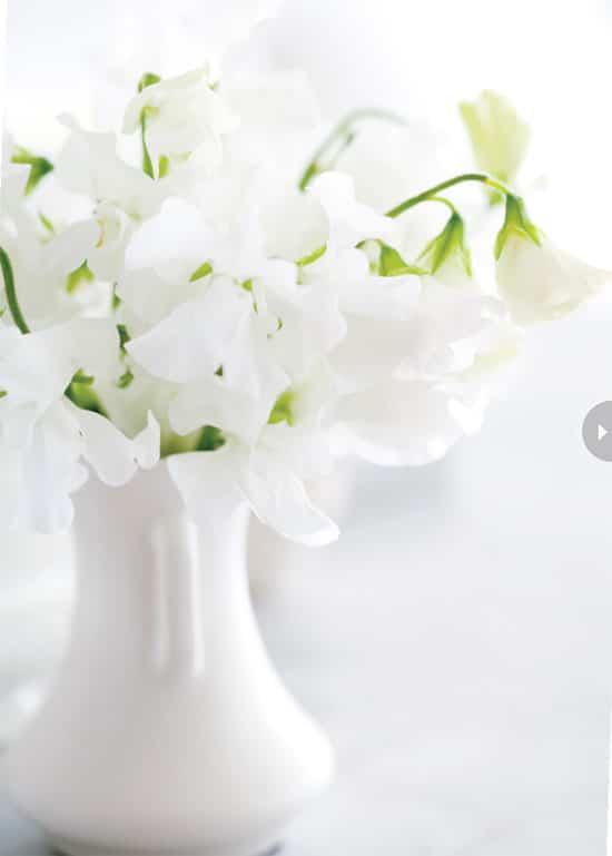 homedecor-floral-whites-sweetpea.jpg