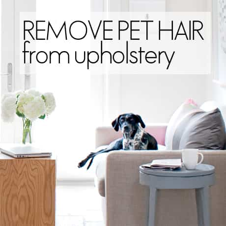 how-to-remove-pet-hair