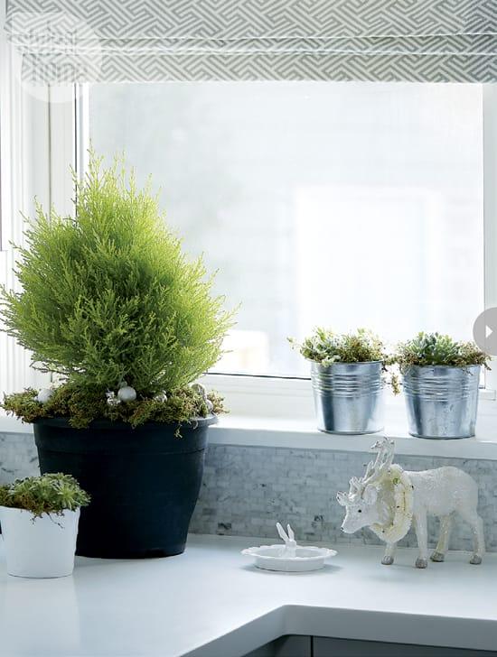interior-muted-xmas-plants.jpg