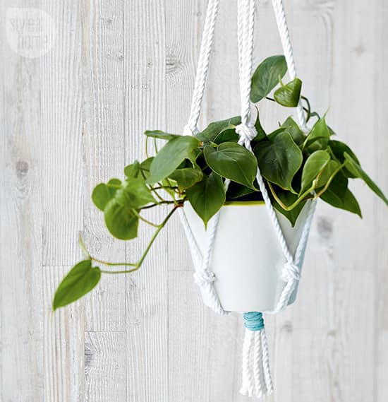 diy-project-plant-hanger.jpg