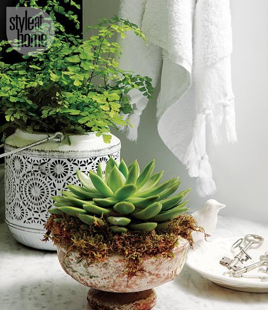 decorating-fancy-bath-plants.jpg