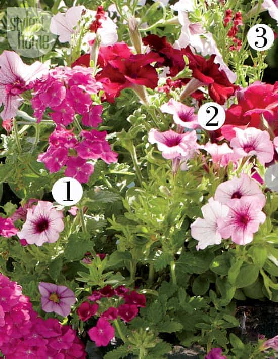 how-to-perfect-flowers.jpg