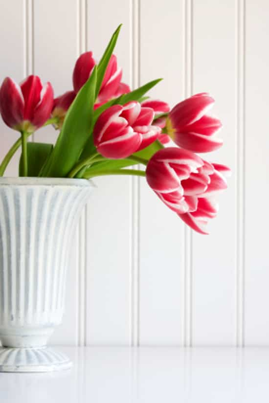 welcome-spring-flowers.jpg