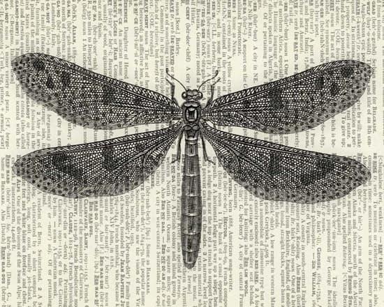 Cheerful-dragonflyart-550.jpg