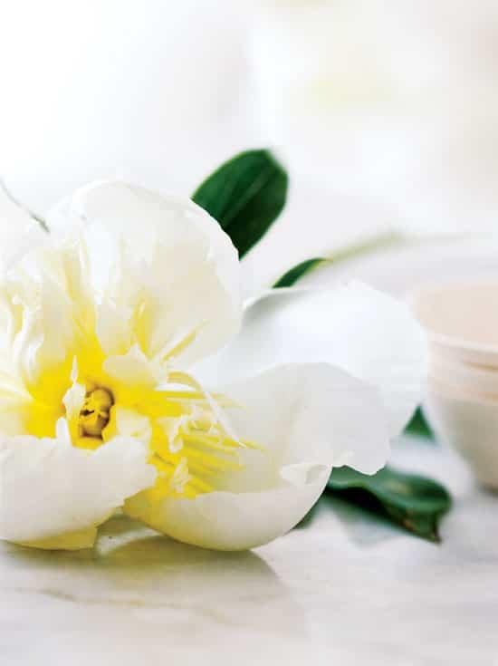 homedecor-floral-whites-peoniesl.jpg