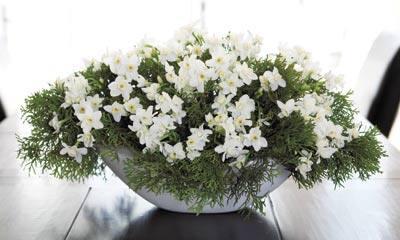 michael-george-white-flower.jpg