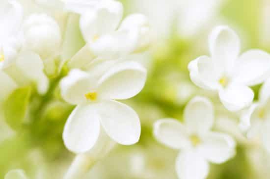 welcome-spring-garden.jpg