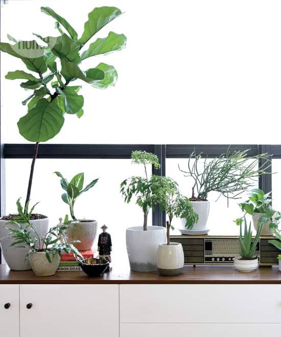 high-low-living-plants.jpg