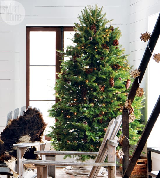 Find everything you need to know to keep your evergreen fresh and contain the inevitable mess.