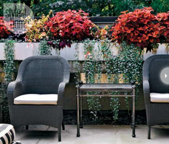 plant-decor-indoors-arrangements.jpg