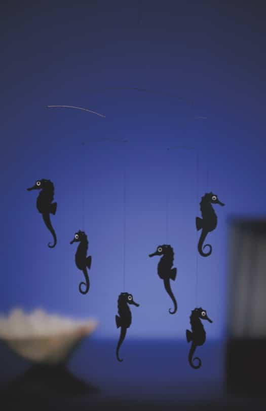 f-seahorses