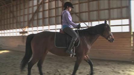 centre equestre epona