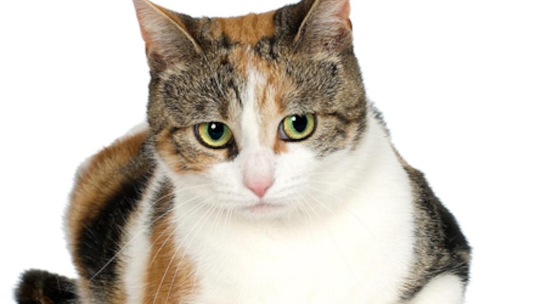 La maison br le le chat sauve la famille tva nouvelles for Adaptation chat nouvelle maison