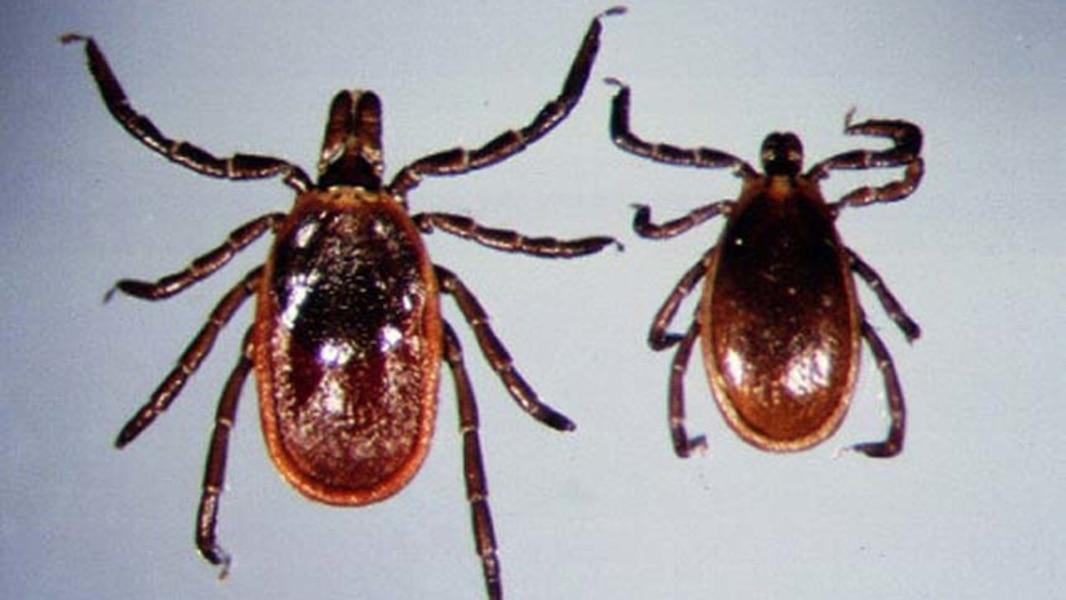 La maladie de Lyme représente un risque grandissant | TVA
