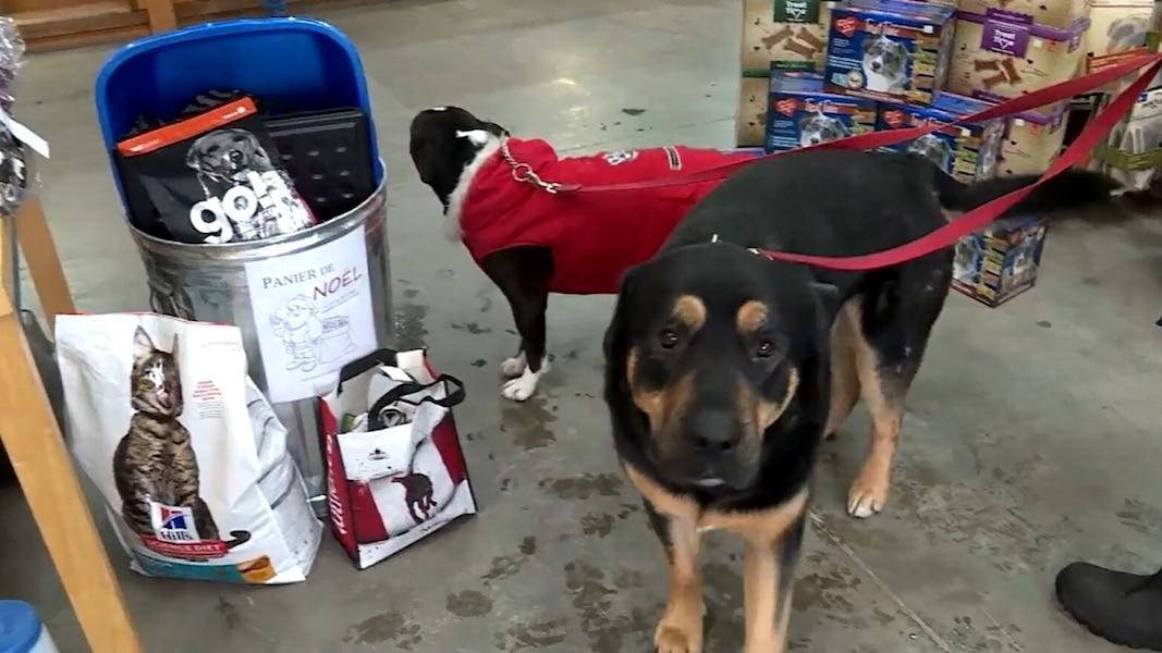 Elle prépare des paniers de Noël pour chats et chiens