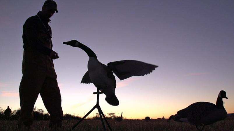 Québec à vol d'oiseau : chasse à la bernache du Canada à la Pourvoirie Franval