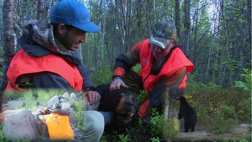 Notre chasse à l'ours à la Baie-James