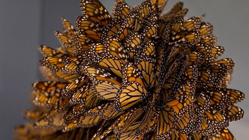 L'Aquarium du Québec présente le Festival des insectes