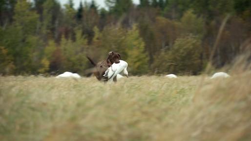 Québec à vol d'oiseau - Chasse à l'oie blanche au Lac St-Jean