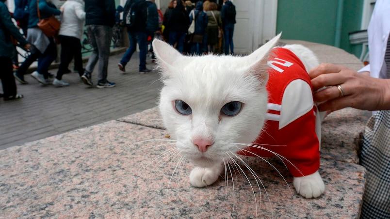 Mondial 2018: Achille le Chat, le pronostiqueur