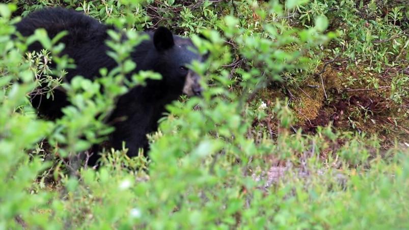 LeCamp en pourvoirie - Pourvoirie Chenail du Nord